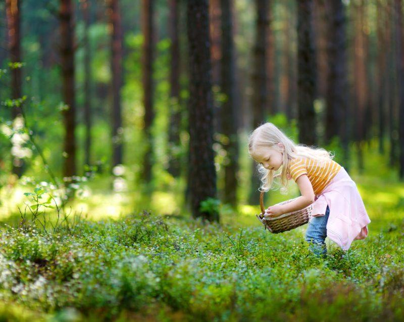 Barn som plockar bär i skog