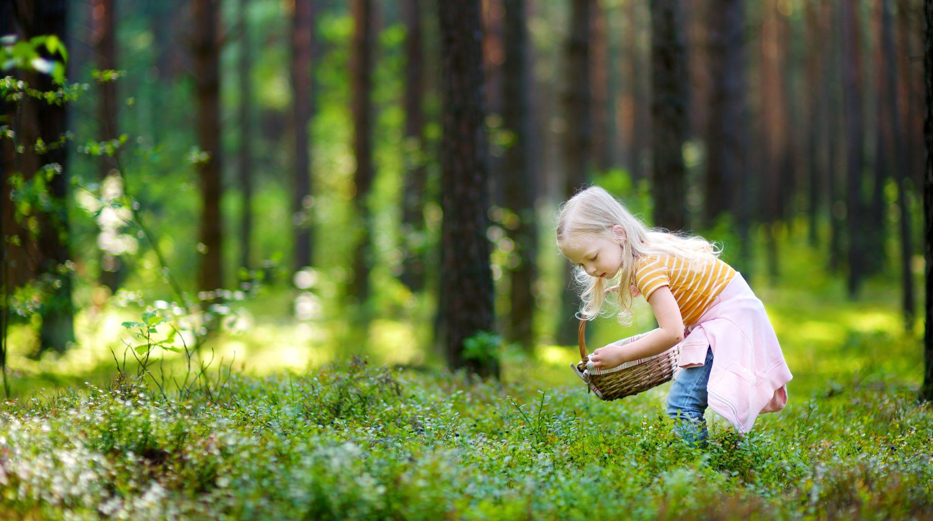 Ett barn som plockar bär i en skog som